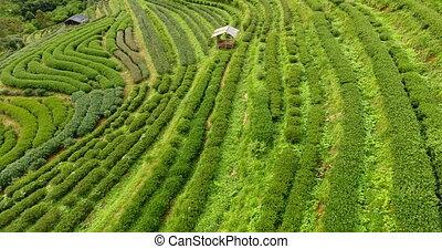 plantation, aérien, mountain., thé, vue, terrasse