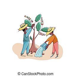 plantation., café, agricultores, vetorial, illustration., cutie, homens, colheita, characters., caricatura, água, árvores.