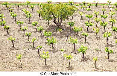 plantation, concept, nature, arbres, environnement, écologie, petit