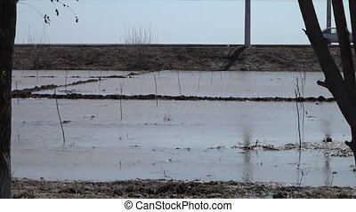 Plantation field filled with water in Uzbekistan - A wide...