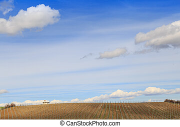 Plantation field with blue sky and clouds.