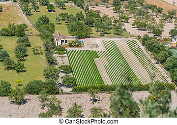 Plantation fields in Mallorca - Bird perspective in various...