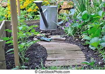 plantation in a vegetable garden