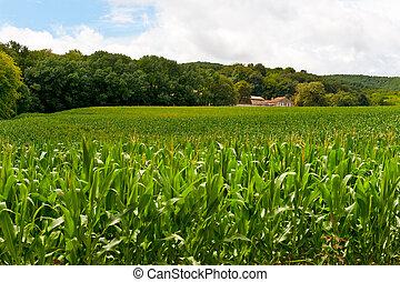 Plantation of Fodder Corn in France