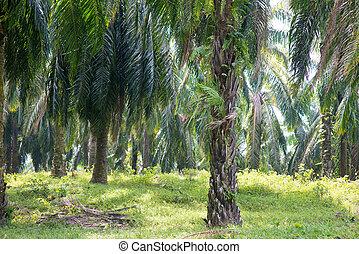 plantation, palme huile, asia.