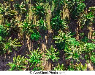 plantation, paume, aérien, arbres, vue