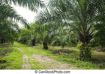plantation., paume, huile
