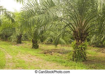 plantation, paume, huile