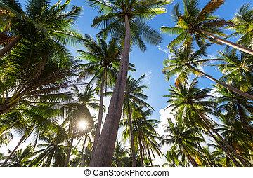 plantation, paume