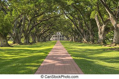 plantation, ruelle, chêne