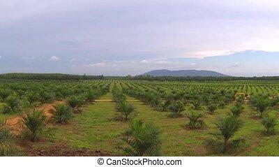 plantation, thaïlande, vue aérienne