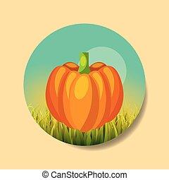 plantation vegetable harvesting pumpkin