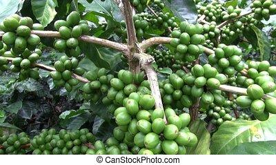 plantations, café, usines, fermes
