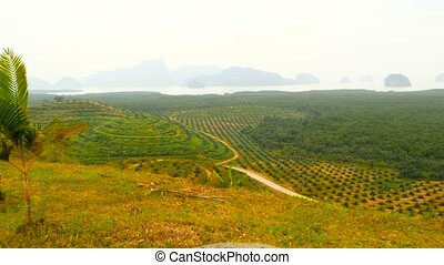 Plantations of oil palm tree rows are seen from above. Tropical landscape.