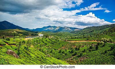 plantations thé, dans, inde