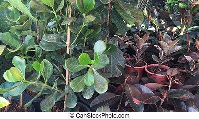 plante, achats, marché, fenêtre