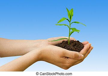 plante, agriculture., main