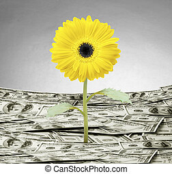 plante, argent, croissance, concept