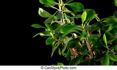 plante, arrière-plan noir