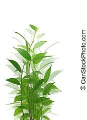 plante, arrière-plan vert