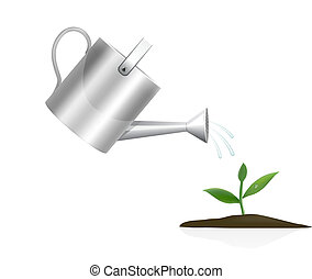 plante, arrosage, jeune, boîte