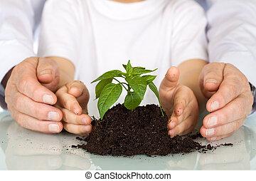 plante, begreb, kimplante, -, miljø, i dag