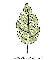 plante, blad, lobed, farve, lys grønnes, farvekridt, silhuet