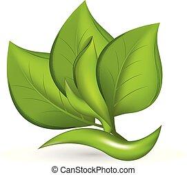 plante, blad, natur, vektor, grønne, logo