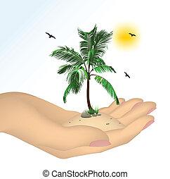 plante, blanc, isolé, fond, main
