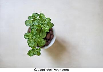 plante, blanc, isolé, pot