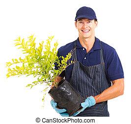 plante, blanc, jeune, tenue, jardinier