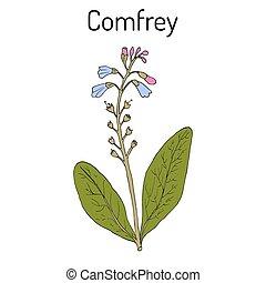 plante, boneset, consound, , knitbone, slippery-root,...