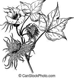plante, branche, coton