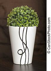 plante, céramique, vert, planteur, étroit