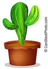 plante, cactus, pot