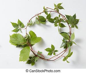 plante, cadre, vert, hedera, lierre, hélix