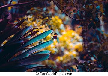 plante, closeup, papillon, forêt, vue, nature