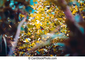 plante, closeup, papillon, grunge, vue, effet, nature, forêt