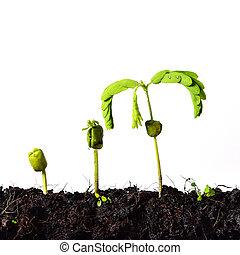 plante, concept, amour, nature, -, croissance, germination