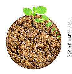 plante, concept, planète, évolution, isolé, desséché, croissant, blanc dehors