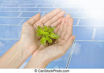 plante,  concept, solaire, cellules, Écologie, vert, tenue, mains