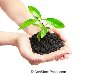 plante,  concept, tenue, vie, vert, humain, mains, petit, nouveau