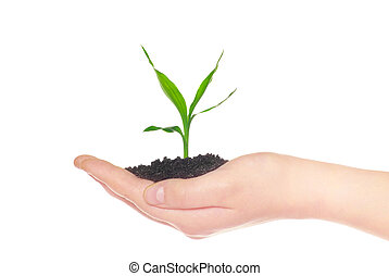 plante,  concept, vie, vert, tenue, mains, petit, nouveau