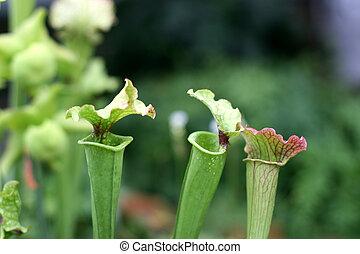 plante, cruche