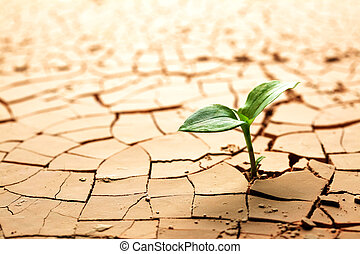 plante, dans, séché, boue fêlée