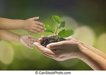 plante, enfant, prendre, mains