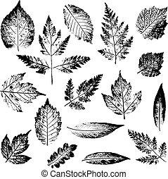 plante, ensemble, feuille, timbres, feuilles, arbre, isolé, arrière-plan., buisson, imprint., encre noire, blanc, print.