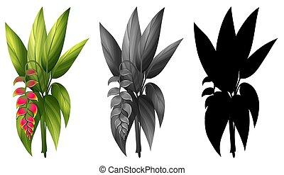 plante, ensemble, même