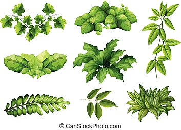 plante, ensemble, nature