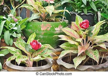 plante, ensemble, pot, pots, collection, houseplants, fleur, fleurs